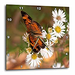 3dRose Monarch Butterfly On Wild Daisies - Wall Clock, 10 by 10-Inch (dpp_11861_1)