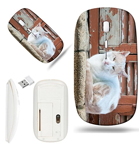 Animals Pane - Luxlady Wireless Mouse White Base Travel 2.4G Wireless Mice with USB Receiver, 1000 DPI for notebook, pc, laptop,mac design IMAGE ID: 34590480 Beautiful white cat pet animal sitting on a window pane