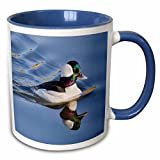 "3dRose mug_45566_6 ""Male Bufflehead Duck Swimming with Reflection. Bolsa Chica WetlandsCalifornia"" Two Tone Blue Mug, 11 oz, Blue/White"