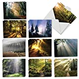 Shining Through - 20 Beautiful Blank Note Cards with Envelopes (4 x 5.12 Inch) - Boxed Assortment of All-Occasion Outdoor Landscape Greetings - Bulk Notecard Set (2 Each, 10 Designs) AM1735OCB-B2x10