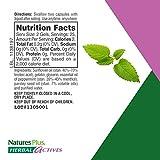 NaturesPlus Herbal Actives Optifresh Breath Gels 12 Pack - 50 Softgels - Maximum Potency Natural Bad Breath Remedy, Herbal Halitosis Relief - With Peppermint - Gluten-Free - 300 Total Servings
