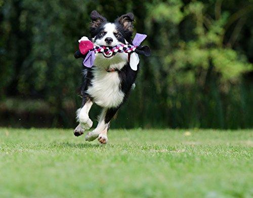 -Stick Poster of Playful British Sheepdog Border Collie Running Dog Poster 24x16 Adhesive Sticker Poster Print ()
