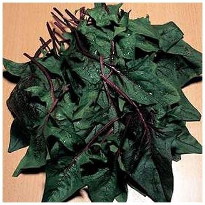 Spinach Bordeaux 250 seeds : Garden & Outdoor