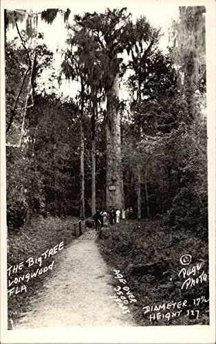 The Big Tree Longwood, Florida Original Vintage Postcard