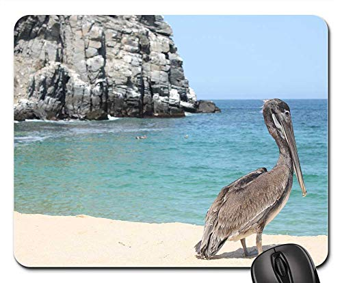 Mouse Pads - Pelican Beach Wildlife Coast Rock Punta Lobos ()