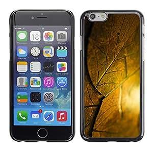 Cubierta de la caja de protección la piel dura para el Apple iPhone 6PLUS (5.5) - sun leaf nature autumn summer
