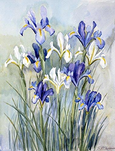 Small Iris Garden - Caroline's Treasures CBC0033GF Iris by Bettie Cheesman Garden Flag, Small, Multicolor