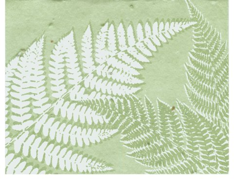 Grow A Note® All Occasion Fern 2011 Cards 5-pack