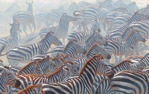 SunsOut 71214 - Zebras (SEHR schwer) - Puzzle 550 Teile