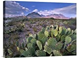 "Global Gallery GCS-397024-1824-142 ""Tim Fitzharris Opuntia Cactus Chisos Mountains Big Bend National Park Texas"" Gallery Wrap Giclee on Canvas Print Wall Art"