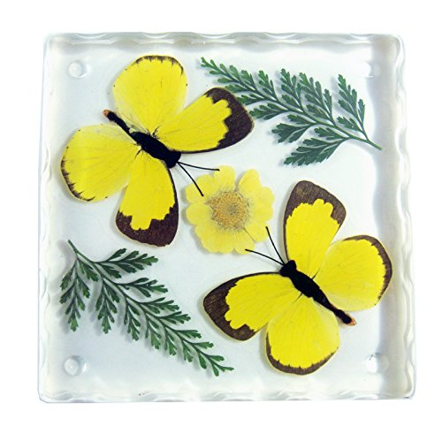 REALBUG Resin Coaster with Two Grass Yellow Butterflies (Butterfly In Resin compare prices)