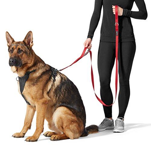 AmazonBasics Double Handled Padded Dog Leash - 6 Foot, Black