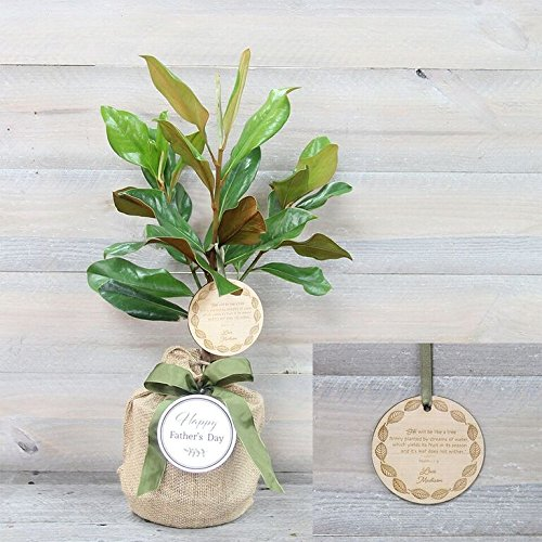 Southern Magnolia Father's Day Gift Tree by The Magnolia Company - Get Beautiful and Fragrant Flowers on a Lush Father's Day Magnolia Tree Gift (Fragrant Flowering Tree)