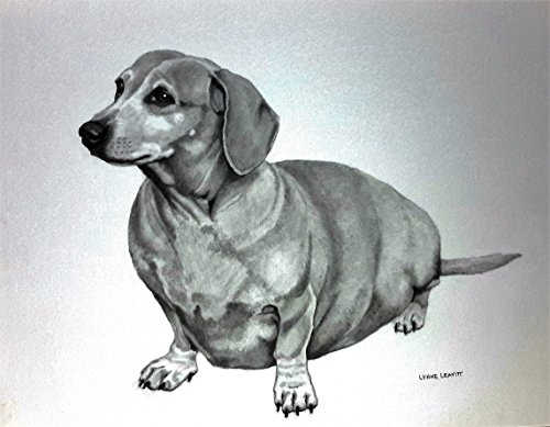 8x10 Pencil portrait drawing dog commission by Lynne Leavitt Portraits