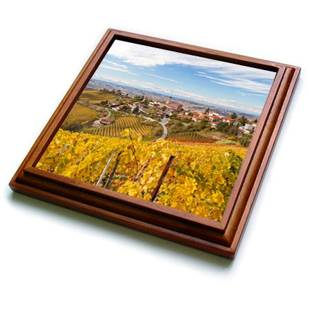 Danita Delimont - Italy - Vineyards, Treiso, Alba, Langhe, Piedmont, Italy - (Piedmont Counter)