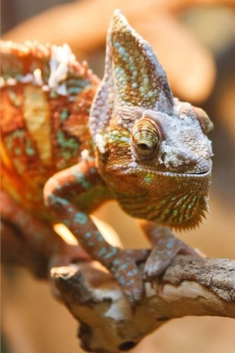 A Cool Chameleon (Chamaeleon)Lizard Journal: 150 Page Lined Notebook/Diary