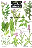 A Key to Grassland Plants 1