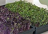 GreenEase Jute Microgreen Hydroponic Grow Pads - 10