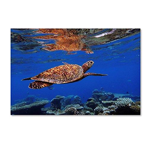 Mirror Sardine - Turtle And Sardines by Martina Dimunova, 12x19-Inch Canvas Wall Art