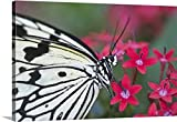 Gallery-Wrapped Canvas entitled Close-up of Paper Kite Butterfly - Best Reviews Guide