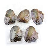 Nameo Wholesale 10pcs Akoya Oysters with Cultured Oval Pearls Inside Birthday Gifts (7.5-8mm)