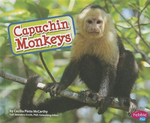 Capuchin Monkeys - Monkey Capuchin