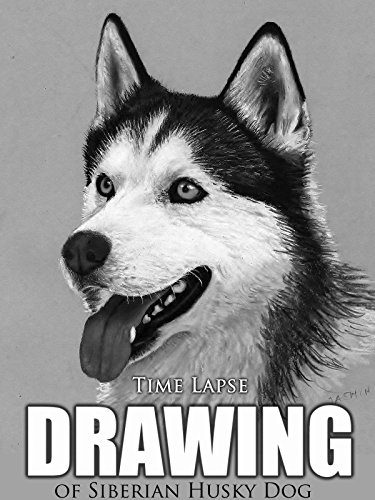 Clip: Time Lapse Drawing of Siberian Husky Dog