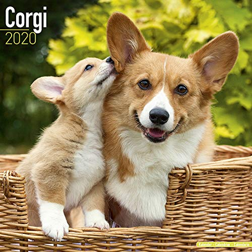 Corgi Calendar 2020 - Dog Breed Calendar - Wall Calendar 2019-2020 ()