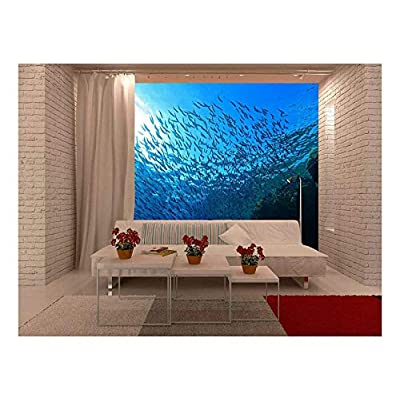 Made For You, Fascinating Piece, Shoal of Sardines in The Blue Water of The Red Sea