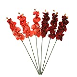 Hosley Set of 6 Assorted 28'' Long, Orchid Phalaenopsis - Salmon & Burgandy. Great for Use with Vases, for Home, Wedding, Spa & Special Occasions. O9