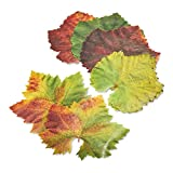 Sur La Table Parchment Paper Cheese Fall Leaves, Pack of 20