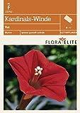 Kardinals-Winde Rot von Flora Elite