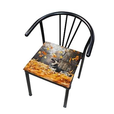 Bardic FICOO Home Patio Chair Cushion Fall Maple Leaves Dog Square Cushion Non-Slip Memory Foam Outdoor Seat Cushion, 16x16 Inch: Home & Kitchen