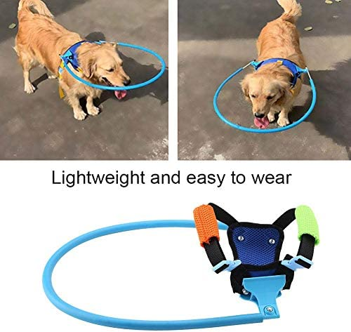 Blind Dog Safe Pet Ring Behavior Aid Dogs Protect Angel Wing Blue Taidda 【Especial de A/ño Nuevo 2021】 Aid Dogs Protect Wing Angel Wing 1#