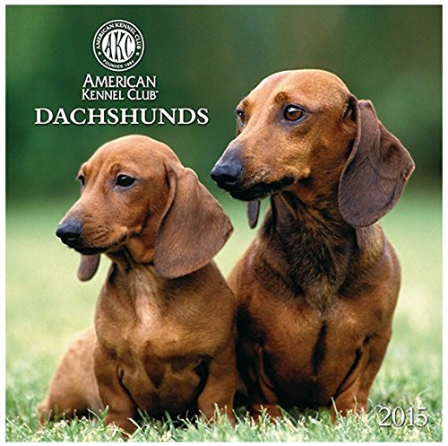 2015 Dachshunds AKC American Kennel Club Wall Calendar Zebra Publishing [jg]