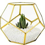 MOCTUS Glass Geometric Terrarium - Succulent Planter - Brass Container Box for Garden/Outdoor/Indoor/Home Decoration, Wedding Gift - Gold Pentagon Sphere Pot Holder for Display/Tabletop/Desktop
