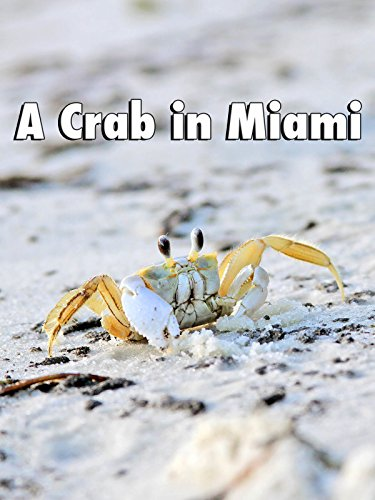 Clip: A Crab in Miami - Miami Bay Biscayne