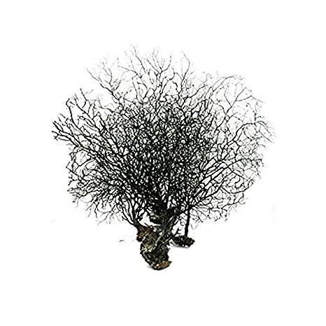 Pixnor Planta de acuario adorno Coral peces tanque decoración negro 20 cm x 15 cm: Amazon.es: Hogar