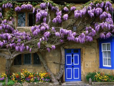What Wisteria Can Teach Us About an Out-of-control Government