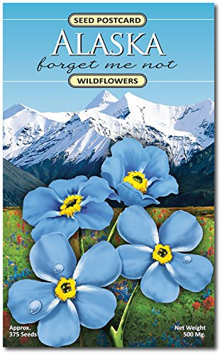 Alaska Forget Me Not (Myosotis Alpestris) Wildflower Seed Packet - Enjoy The Natural Beauty of Alaska Flowers in Your Own Home Garden - State Flower