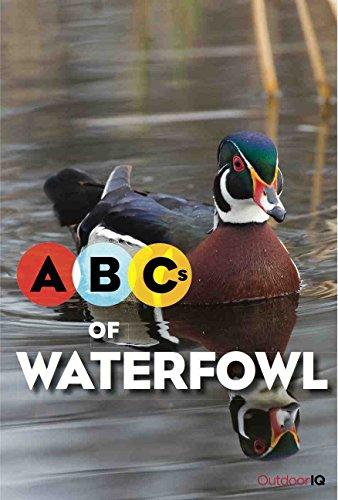 Abc Duck - 4