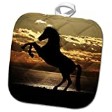3dRose Wonderful Sunset with Black Horse Farm Animal Nature Ocean Pot Holder,