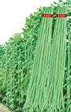 Seedscare India Yard Long Beans Super Seeds (Pack of 20, 2 Packets)