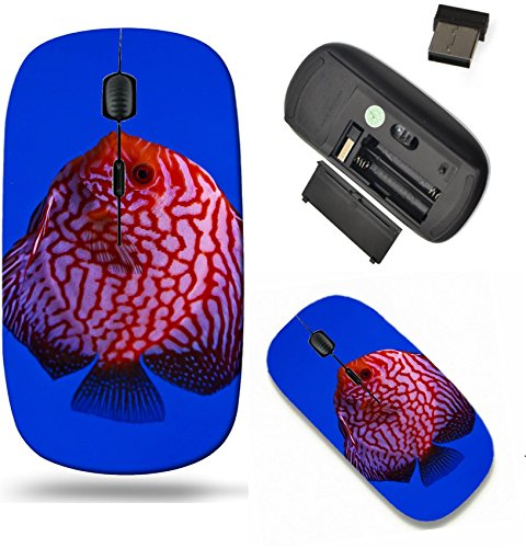 - Liili Wireless Mouse Travel 2.4G Wireless Mice with USB Receiver, Click with 1000 DPI for notebook, pc, laptop, computer, mac book IMAGE ID: 13195253 Pigeon discus fish