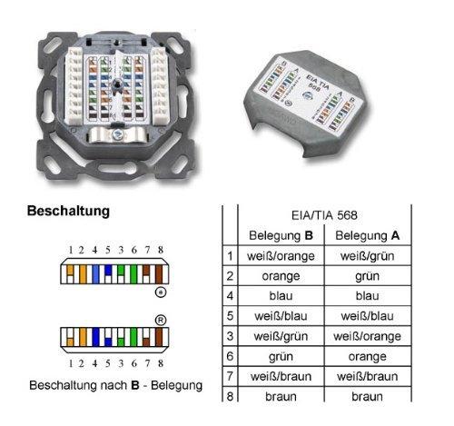 100 Stück – Doppel Datendose Netzwerkdose: Amazon.de: Computer & Zubehör