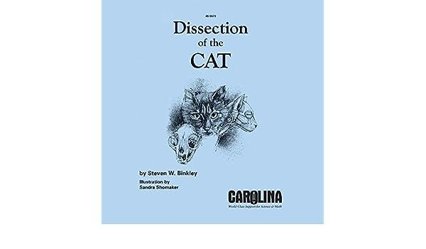 amazon com dissection of the cat guide industrial scientific rh amazon com