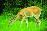 Nature's Seed 2 Acre Great Lakes/New England Big Game Food Plot Pasture Blend