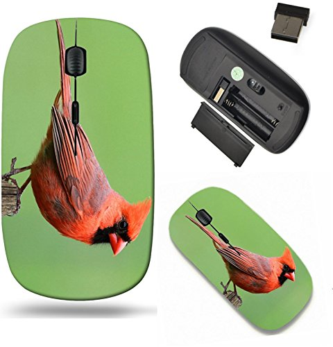 Liili Wireless Mouse Travel 2.4G Wireless Mice with USB Receiver, Click with 1000 DPI for notebook, pc, laptop, computer, mac book Male Northern Cardinal cardinalis cardinalis on