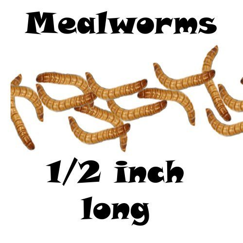 2000ct Live Mealworms, Pet Food for Reptile, Birds, and Fish, Model: , Home/Garden & Outdoor Store