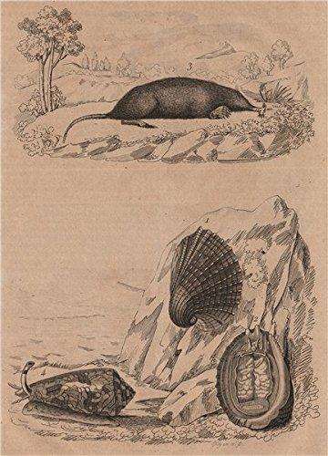 Sea Antique Print - 2